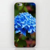 hydrangea iPhone & iPod Skins featuring Hydrangea by Mark Alder