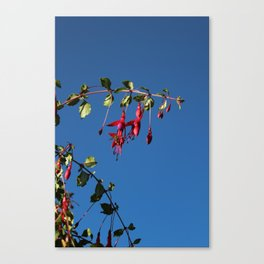 Flower, Hansville, WA Canvas Print