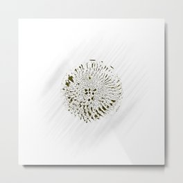 Minimal Nature -  Echinacea Yellow Metal Print