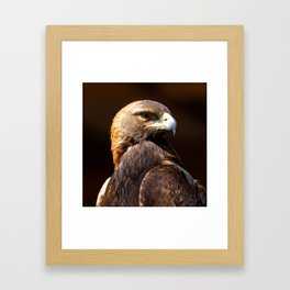 Golden Eagle | Portrait | Eagles | Eagle Photography | Wildlife | Aquila chrysaetos Framed Art Print