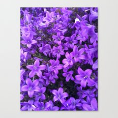 Violetta Blue Canvas Print
