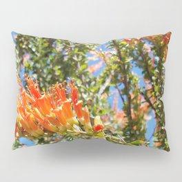 Orange Ocotillo Cactus Pillow Sham