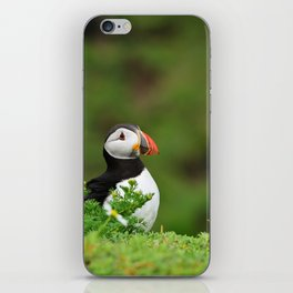 Puffin from Ireland  (RR 238) iPhone Skin