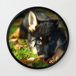 Cute 8 weeks old shepherd puppy Wall Clock
