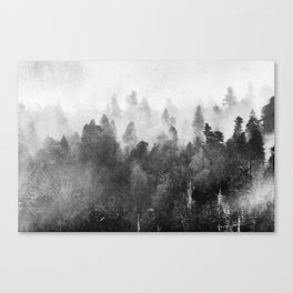 Forest Melody - Redwood National Park Canvas Print