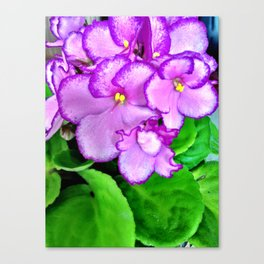 Roses are red, Violets are purple Canvas Print