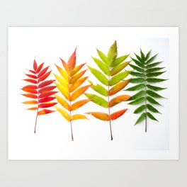 Rainbow Sumac for Autumn in Canada Art Print