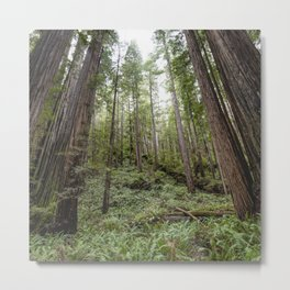 Fern Alley - Redwood Forest Nature Photography Metal Print