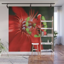 Passiflora vitifolia Scarlet Red Passion Flower Wall Mural