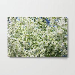 Apple blossom pattern Metal Print