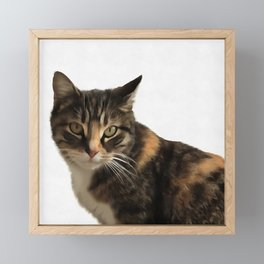 Tabby Cat With Ear Turned Sideways Framed Mini Art Print