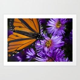 Monarch Butterfly 3 Art Print