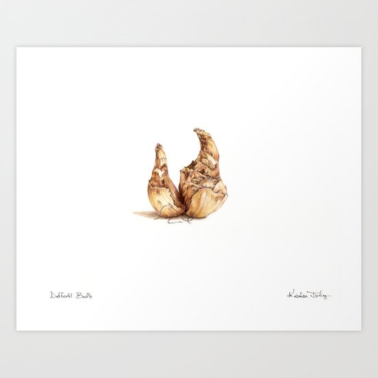Daffodil Bulb Art Print