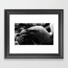 vulture 2 Framed Art Print