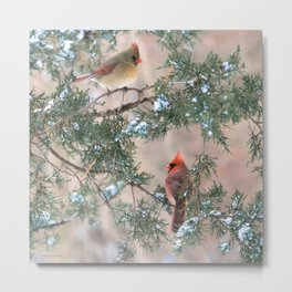 Winter Pair Cardinals (sq) Metal Print