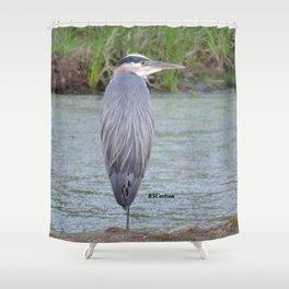 Blue Heron at Hillsboro Pond Shower Curtain