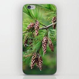 Pine cones iPhone Skin