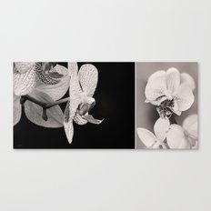 Black and White - Orchid Canvas Print