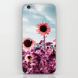 Pink Sunflowers iPhone Skin