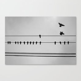 pigeons hanging out Canvas Print