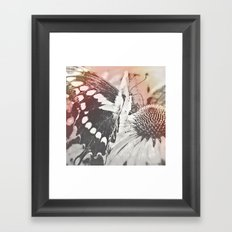 rose glow butterfly and coneflower Framed Art Print