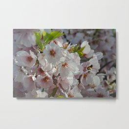 Cherry Blossom and Bee Metal Print