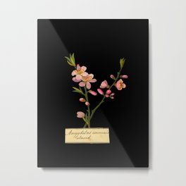 Amygdalus Communis Mary Delany Delicate Paper Flower Collage Black Background Floral Botanical Metal Print