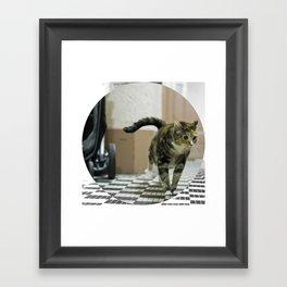 CatSkills© Framed Art Print