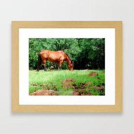 The Happy Horse Framed Art Print