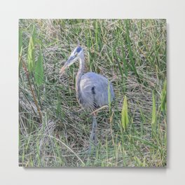 Hello Blue Heron Metal Print