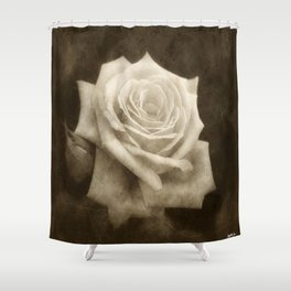Pink Roses in Anzures 4 Antiqued Shower Curtain