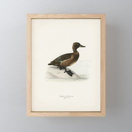 Ferruginous duck female (Nyroca fuligule) illustrated by the von Wright brothers. Framed Mini Art Print