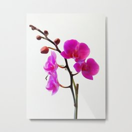 Orchid 4 WC Metal Print