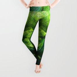 Emerald Tree Boa Leggings