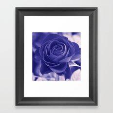 Romantic rose(purple). Framed Art Print