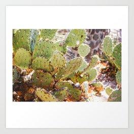 Cactus in the Desert Art Print