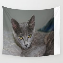 Beautiful Portrait of A Grey Russian Cross Tabby Cat  Wall Tapestry