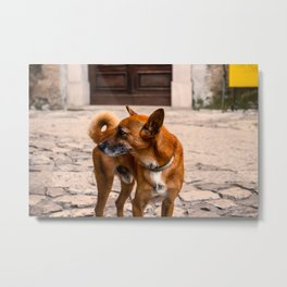 The Orange Dog Metal Print