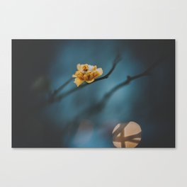 _DSC7096 Canvas Print