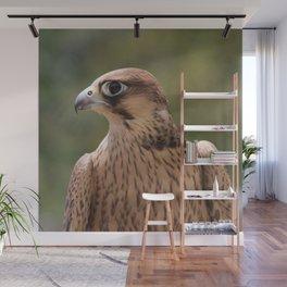 Falco peregrinus pelegrinoides  Wall Mural