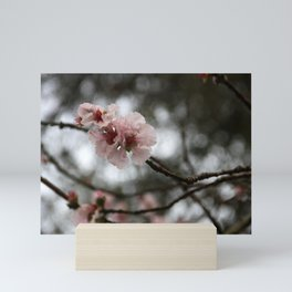 Spring - Oriental Cherry Mini Art Print