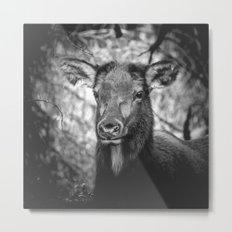 ADORABELK - portrait of a lowland elk nature wild black and white funny animals deer love Metal Print