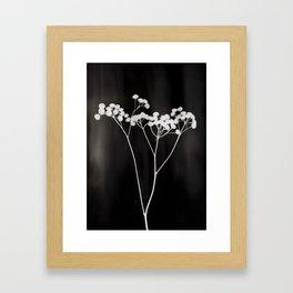 Flower Photogram II Framed Art Print