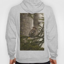 A bohemian waxwing on a pine tree branch Hoody