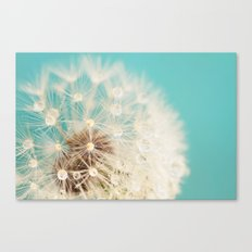 dandelion with waterdrops Canvas Print