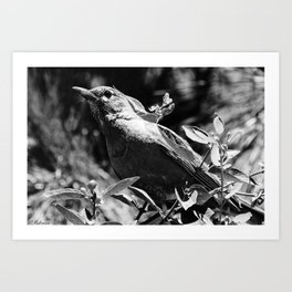 Sing a song for me (Black and White) Art Print