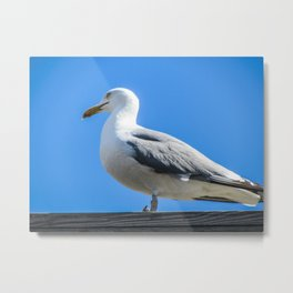 Silly Seagull Metal Print
