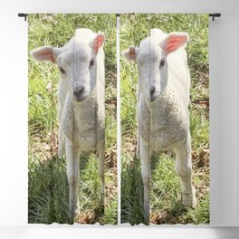 Cute baby spring lamb Blackout Curtain