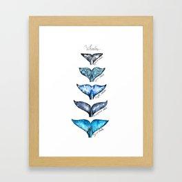 Whale tails Framed Art Print