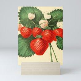 HOVEYS SEEDLING STRAWBERRY. Mini Art Print